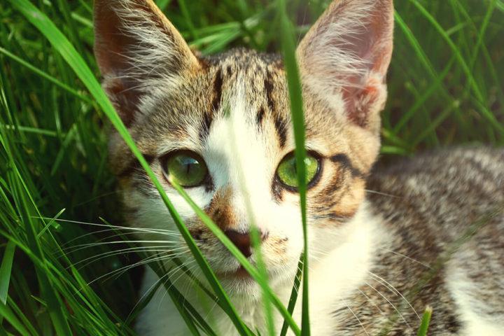 Piesok pre mačky