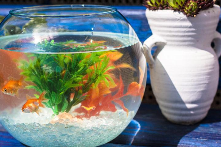Využitie piesok pre akváriá a teráriá